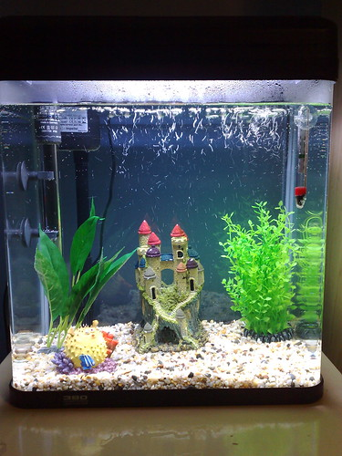 Tom's new fishtank
