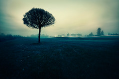 Unsteady (Latyrx) Tags: nikon d90 sigma 1020mm toned fog mist tree field lights end deep silhouette long view stepintorealmyouboundtogetcaught carlightsinthehorizon light flickrbreakforme latyrx finland 2009 nature suomi nikond90 stock sell mikko resize photoshop finnish mikkolagerstedt photography photo perspective shadow graphic