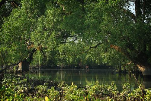 Inside Sundarban
