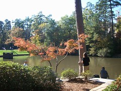 scenery (melisabates) Tags: nc dukegardens fall09