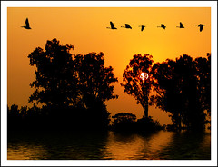 THE DEPARTED (DEVENDRA PAL(AWAY)) Tags: trees sunset red orange sun india white news reflection tree sports nature water river photography photo indian politics literature cricket dev balck express editor whatilove pal journalism journalist joshi hindi columnist magia devendra founder prabhash duniya nayi photographia betterthangood thesuperbmasterpiece showthebest yourwonderland jansatta