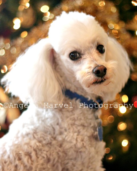 Spencer Christmas