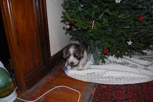 Chrismas Dog 1