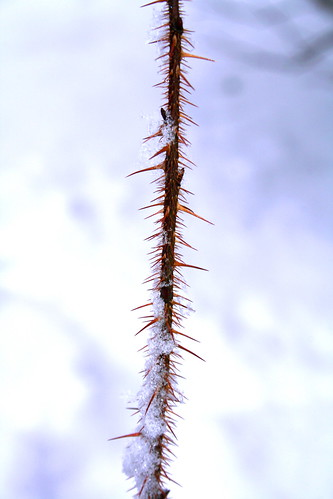 Branch with spikes