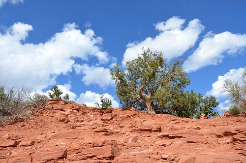 Arizona 2011 580