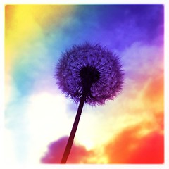 Rainbow Dandelion (BLACK EYED SUZY) Tags: flower rainbow dandelion singlebloom hipstamatic shakeyourhipstamatic