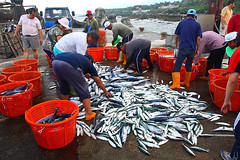 豐富的漁業資源 鍾家榮攝影