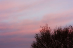 What color is the Martian Sky? (Rice Cake~) Tags: morning pink blue sky tree canon 50mm branch purple f18 450d