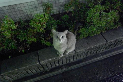 Today's Cat@20090701