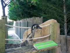 DSCN4123 (inenya) Tags: animal ostrich avestruz faunia