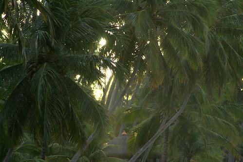 2009 juillet Tamandaré (173)