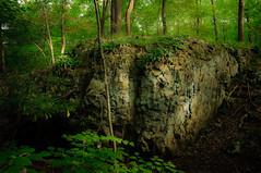 old fern top [1]