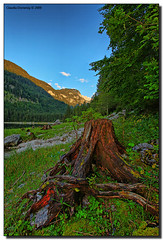 Tree Stump (Fraggle Red) Tags: tree austria sterreich canonef1740mmf4lusm obersterreich hdr treestump upperaustria gosausee vob 3exp vorderergosausee dphdr vosplusbellesphotos