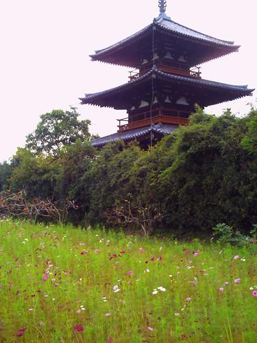 法起寺とコスモス@トイカメラ-05