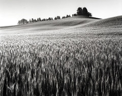 Sunrise in eastern Washington (Pierre Galin) Tags: bw white black film sunrise washington wheat large wa 4x5 format pyro eastern palouse pmk 200900145
