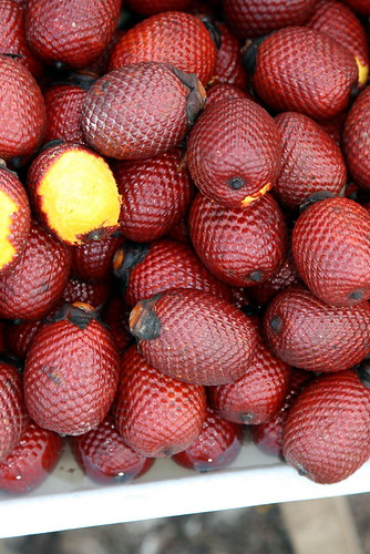Aguaje - Mauritia flexuosa (Arecaceae)
