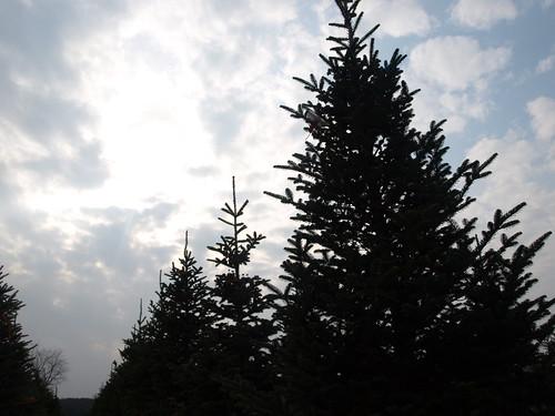 Treefarm 019