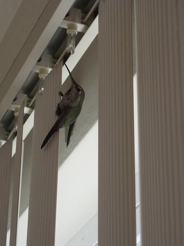 Hummingbird!!!