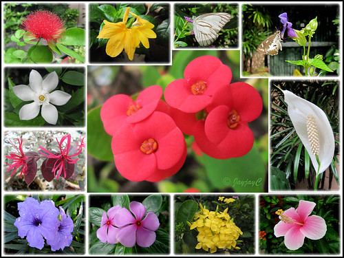 Collage of colourful flowers and butterflies captured in our tropical garden, November 2009