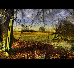 Graveyard for leaves (Martyn Starkey) Tags: autumn red tree broken leaves fence norton nottinghamshire vosplusbellesphotos