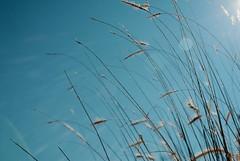 2009:12:21__12:21:46 (MilkaWay) Tags: winter sky grass georgia athens solstice 365 2009 aphotoaday day355 clarkecounty p3652009