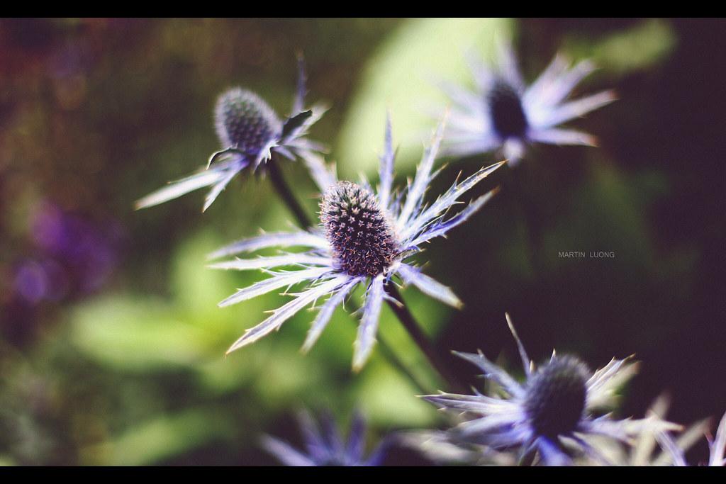 IMAGE: http://farm3.static.flickr.com/2526/5702016284_05a13b74c4_b.jpg