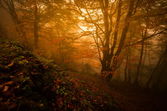 Fog season (JD Photographie.) Tags: autumn leaves trees colors wood forest mood mist fog foggy light cévennes parc national france gard europe cpl lee filter polarizer sony canon tree arbre languedoc languedocroussillon