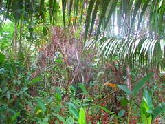 IMG_8985 (claudio.secci) Tags: grandriverlodge riosanjuan