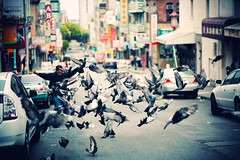 CHARGE! (SHUN [iamtekn]) Tags: sanfrancisco street morning birds canon fly flying wings chinatown shot action pigeons flock flight 85mm run explore bayarea chase 5d canon5d scare flap charge canoneos5d shootwideopen explored canonef85mmf18usm tekn allenormous