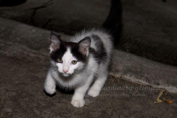 new-kitten_Jul262009_0007web