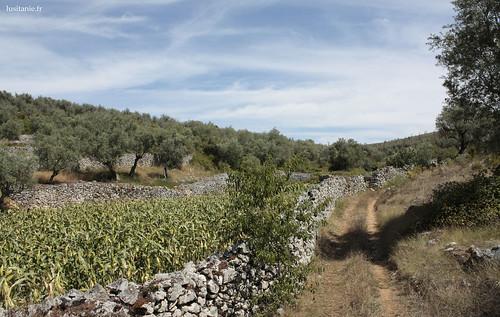 Parcelas delimitadas por muros de pedra