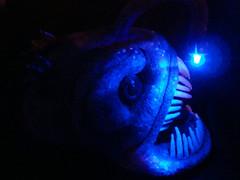 Angler Fish 2