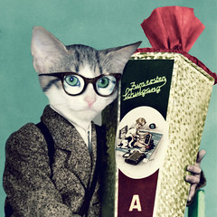 the good boy (Martine Roch) Tags: boy portrait pet animal cat vintage glasses kid kitten funny fifties child surreal gift photomontage suprise manray goodboy specticals petitechose martineroch flypapertextures
