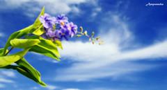 Feel Free :) / อยากมีชีวิตเหมือนกับดอกไม้ดอกนี้