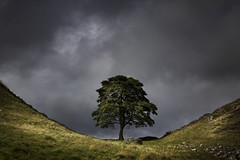 Wulf's Tree (Graeme Webb) Tags: light england tree weather wall clouds landscape robinhood lonetree wulf