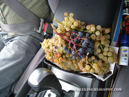 grapes in car