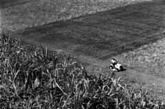 Mower (Max Eremine) Tags: bw white abstract black film grass analog iso100 lawn olympus diafine fujifilm neopan geometrical mower etowah om4 etowahindianmounds