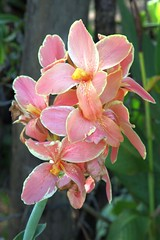 IMG_3210 (jozef muylle) Tags: flowers philippines natuur bohol bloemen filippijnen