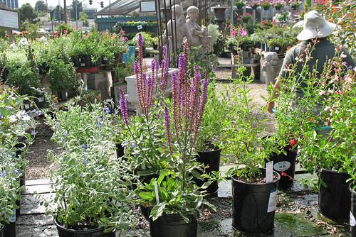 small perennials