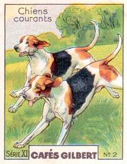 gilbert chiens002
