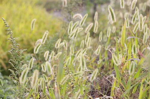 벌초 후 풍경 사진