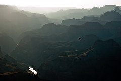 Grand Canyon (sausyn) Tags: park sunset arizona usa bird fog river flying colorado tramonto dusk paste grandcanyon fiume canyon national states vola uccello statiuniti pastello