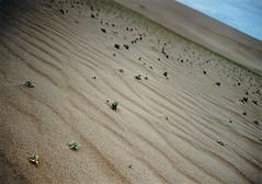 (Juan Pedro Salvo Seade) Tags: plants forest cabo plantas desert bosque desierto polonio