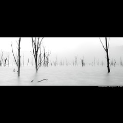 The lake of broken dreams. (J.P.Robertson) Tags: morning trees bw white black reflection tree wet water fog canon dead sticks foggy logs australia stick 50d