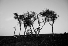 Tree Dance (Dave Arnold) Tags: uk trees light shadow england sky blackandwhite bw abstract black tree art nature monochrome beautiful canon silver dark landscape sussex coast landscapes weird blackwhite dance movement artist mood moody view angle artistic photos farm south horizon hill creative surreal atmosphere wideangle coastal zen mysterious land feeling southeast magical effect eastsussex lightandshadow minimalist atmospheric feelings shimmer fairlight pettlevel the4elements cliffend treesubject arnoldart