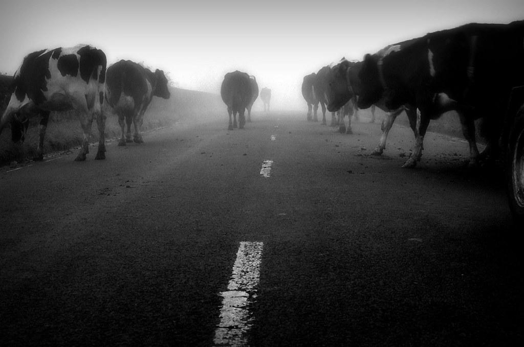 between pastures #13410004