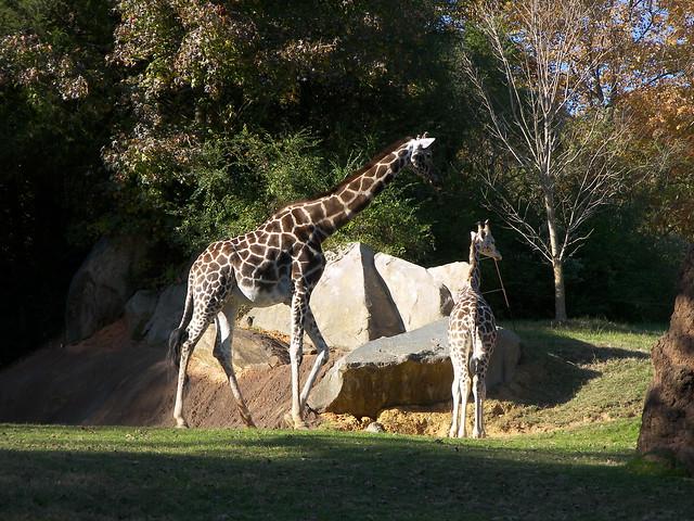 NC Zoo 11.7.2009