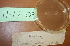 5 days growth (Orlagh) (Belle Isle Homeschool) Tags: fungus bacteria petri germs