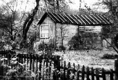 Where to come (Gingertail) Tags: road old autumn bw white black monochrome leaves garden jardin otoño dacha monocle perdido ryazan olvidado otoo