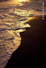 Golden foam washing ashore on black sand beach in Tahiti. (Sean Davey Photography) Tags: pictures color green nature vertical gold blacksand golden energy glow power tube barrel wave alternativeenergy curl tahiti tubing curling shimmer darksand goldenlight greenenergy frenchpolynesia greenpower oceanwave seawave alternativepower oceanswell seandavey oceanpower barreling seaswell paparra photographyfineart finephotographyart curlingwave wavesenergy seawaveenergy oceanenergy oceanwavepictures seandaveyphotography seandaveyfineart goldfoam